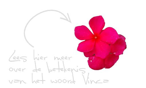 lees-meer-vinca-betekenis-woord